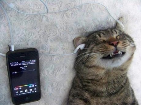 Katt som njuter